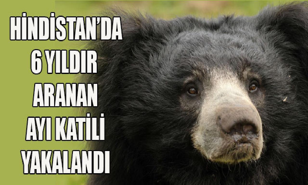 'Libidosunu artırmak için' ayıların cinsî organlarını yiyormuş