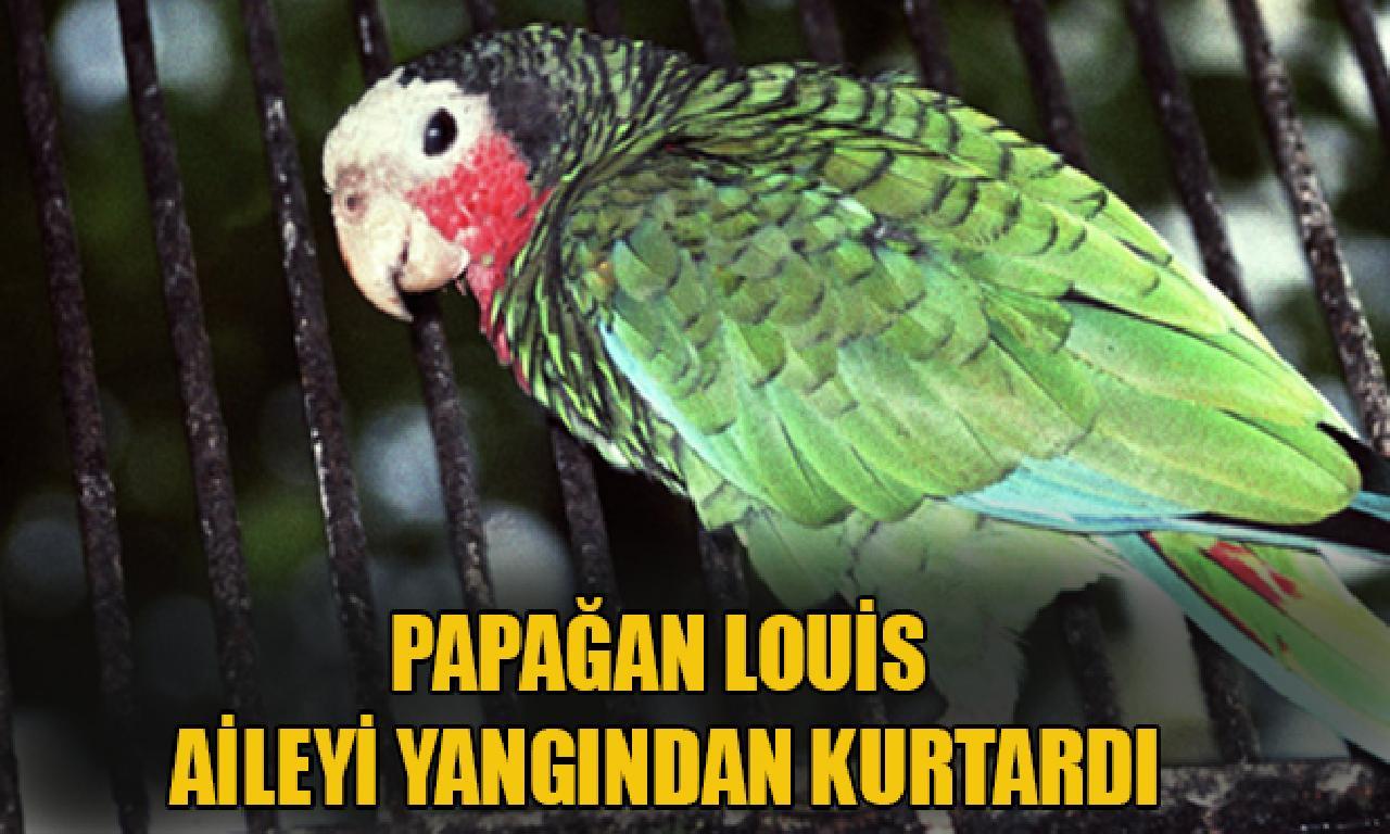 Papağan Louis aileyi yangından kurtardı