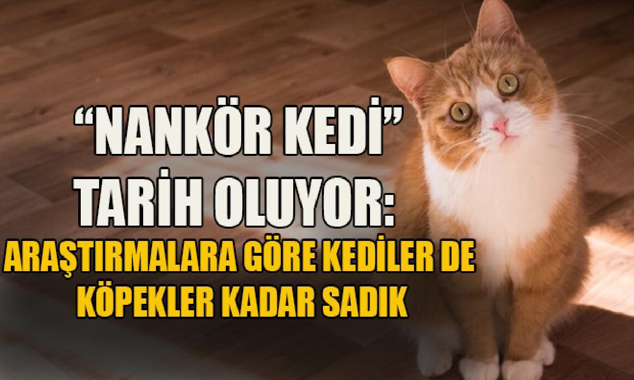 'Nankör kedi' toplumları oluyor