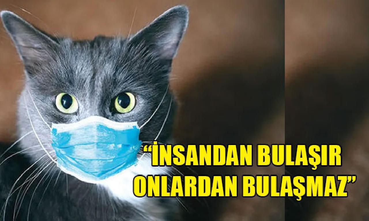 Dünya Sağlık Örgütü'nden hayvanlarla alâkadar açıklama