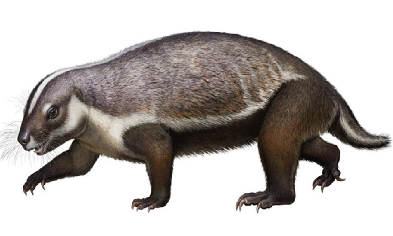 Madagaskar'da Dinozorlar Döneminden Kalma Memeliye Ait Fosil Bulundu