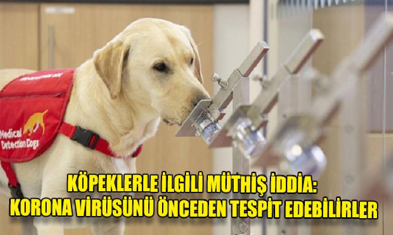 Köpeklerle alâkadar müthiş iddia: Korona virüsünü önceden belirleme edebilirler