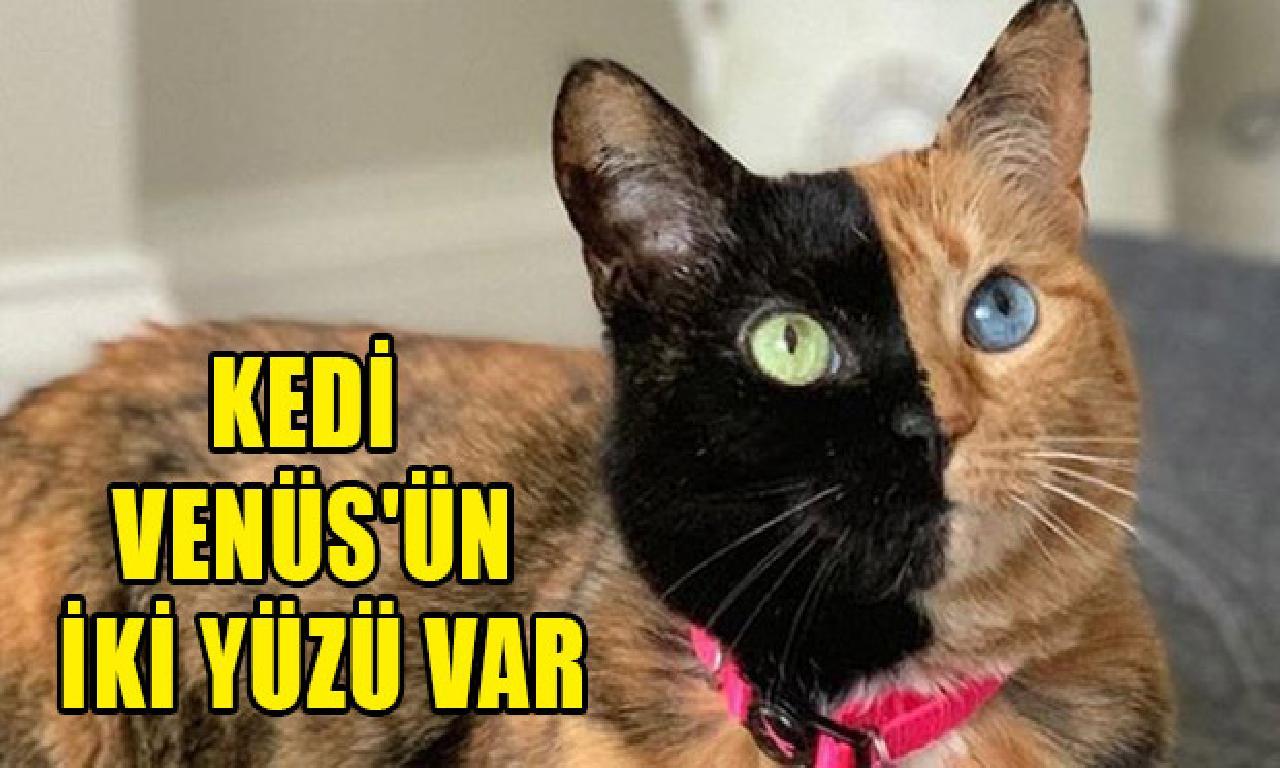 Kedi Venüs'ün çatal yüzü mevcut