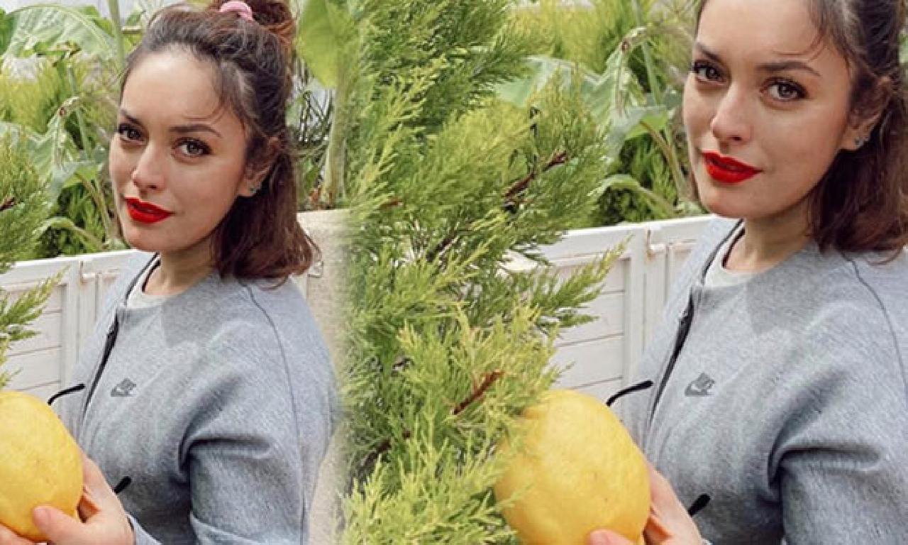 'Çam ağacı birlikte turunçgillerden verdi'