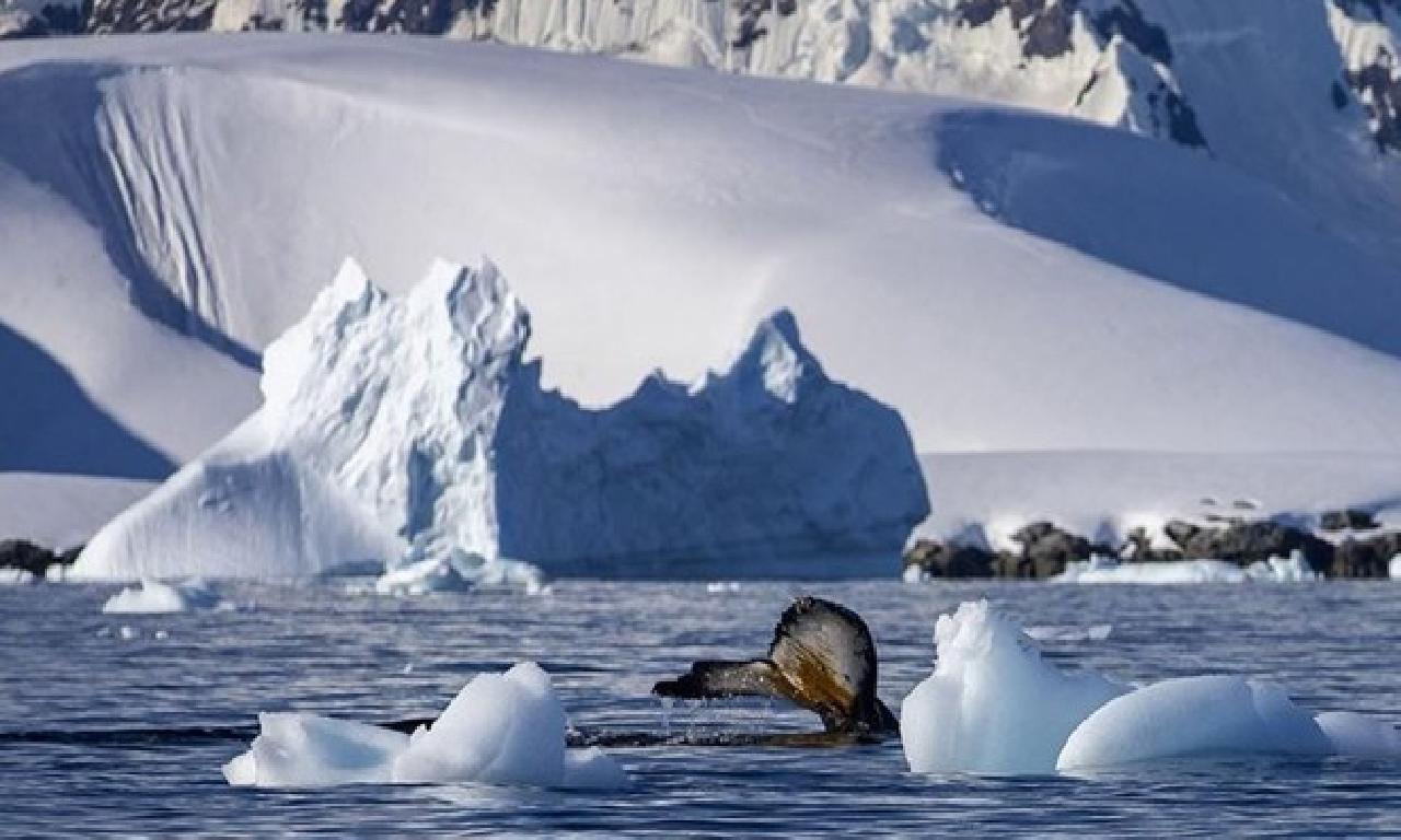 Antarktika'da bağcıklı 68 1000000 yıllık düşünce sürüngenler tek mosazora ilgili olur