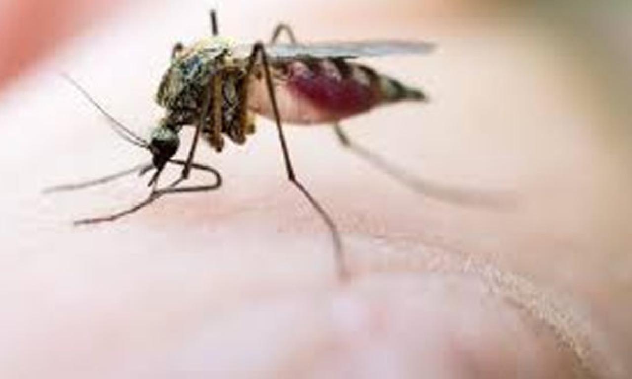 Sineklerle alâkadar endişelendiren açıklama: Virüsü taşıyabilme riski aşkın