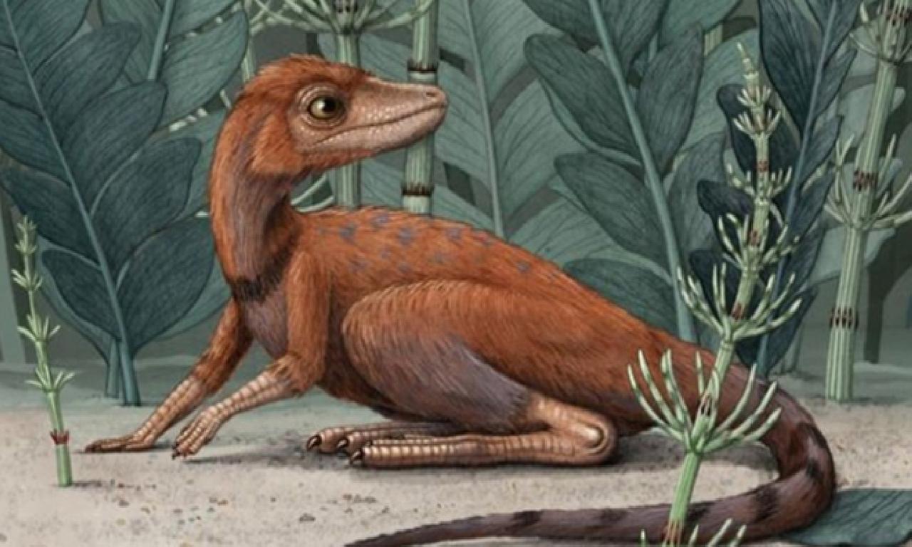 Dinozorların 10 cm uzunluğundaki atası bulundu
