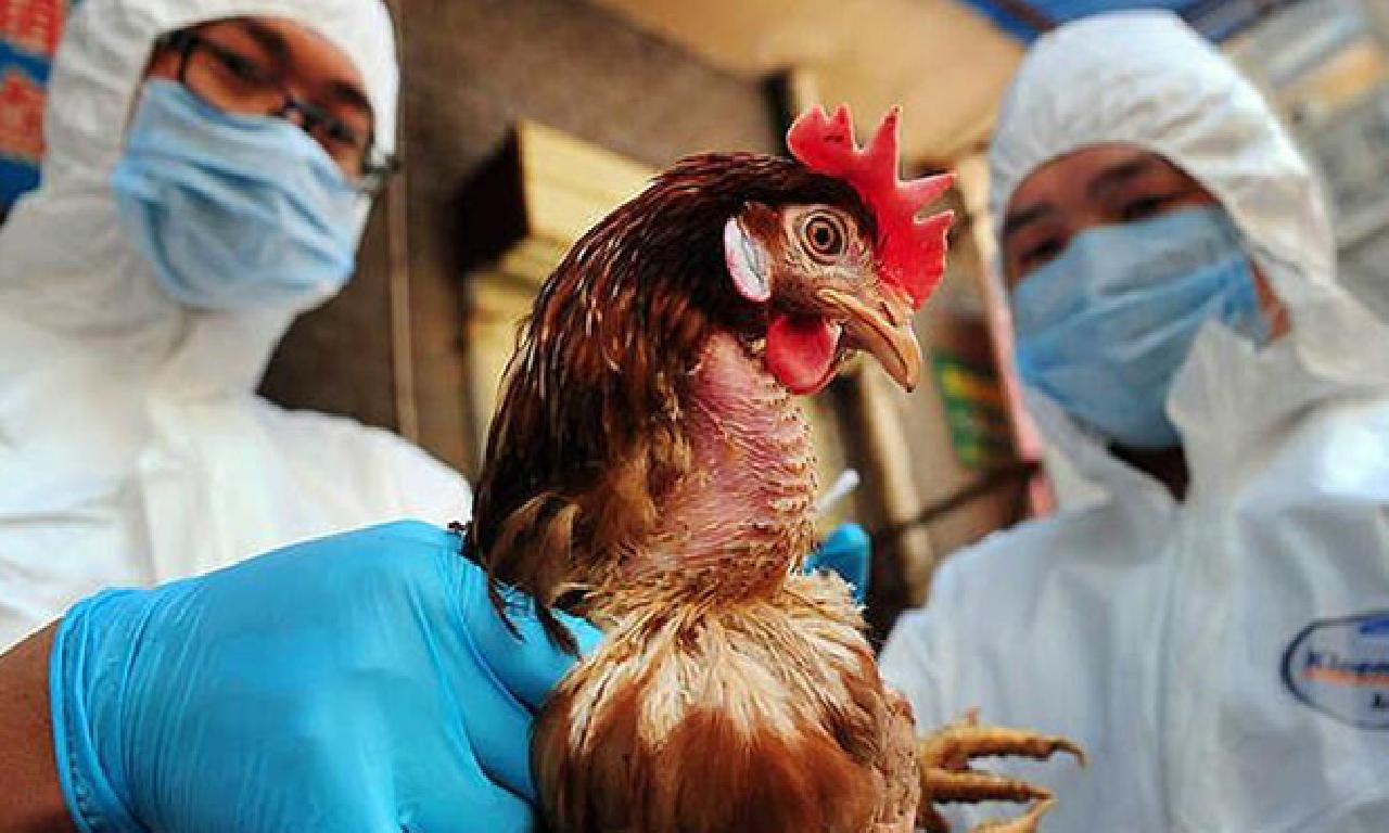 Kazakistan'da kuş gribi belirleme edildi