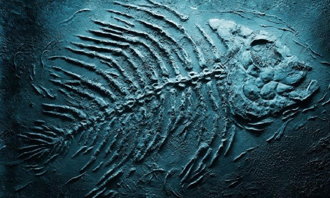 93 1000000 yıllık köpek balığı fosili keşfedildi