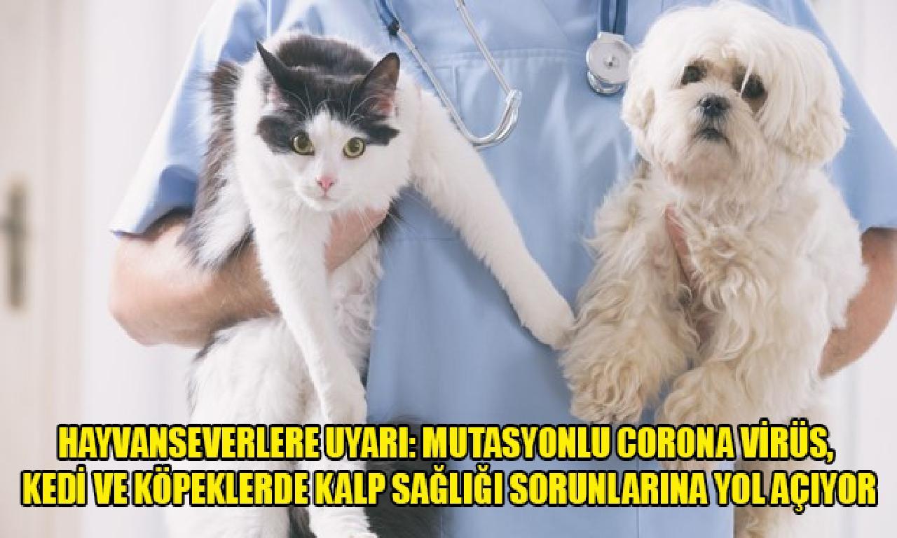 Hayvanseverlere uyarı: Mutasyonlu corona virüs, kedigillerden dahi köpeklerde yürek sağlığı sorunlarına karada açıyor