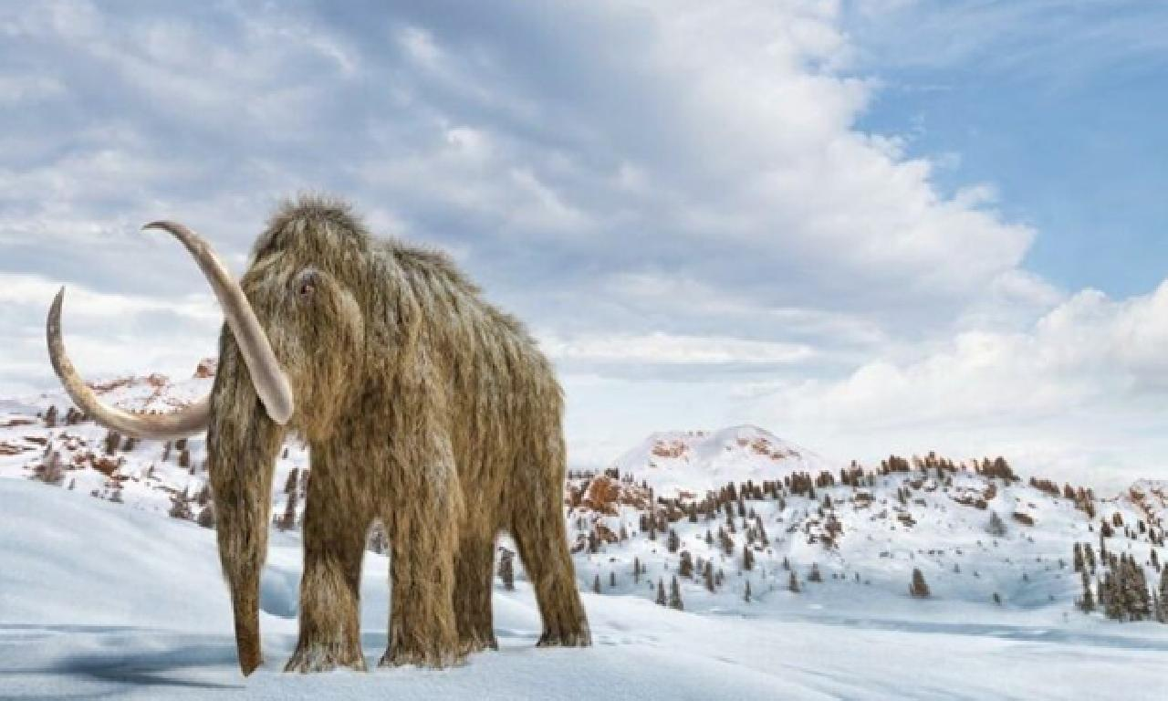 Mamutlar arka geliyor! Bilim insanlarından sıra dışı atılım