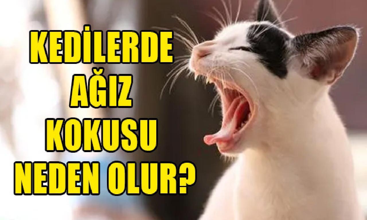 Kedilerde ağız azot sebep olur?