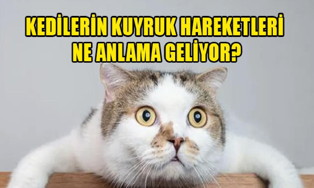 Kedilerin alıştırıcı-montör astronom hangi biliş geliyor?